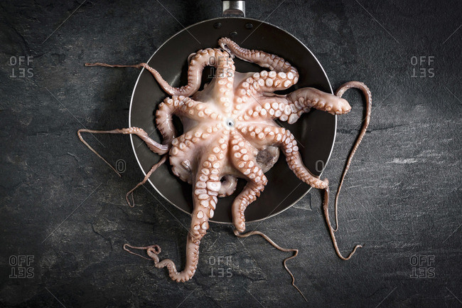 Raw and cleaned octopus ready for preparing