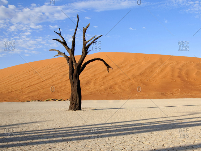 Dead tree in dried lake bed in the Sossusvlei desert region, Namibia