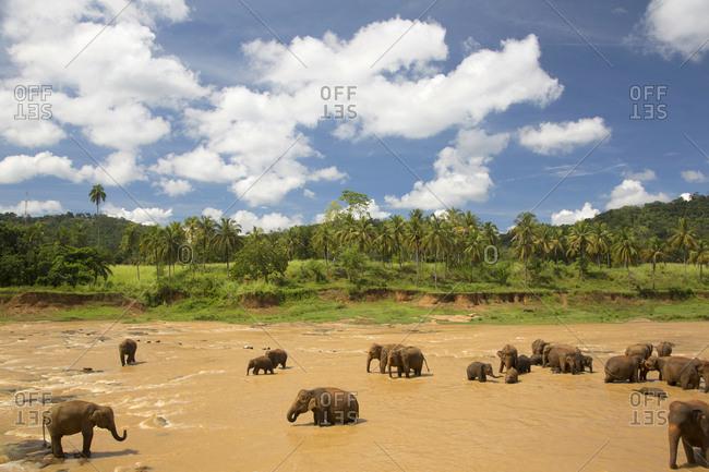 Elephant reserve in Pinnawala, Sri Lanka
