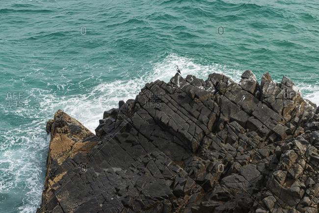 Lonely bird standing on the rocks, Noosa, Australia