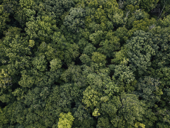 Aerial view of treetops in the summer