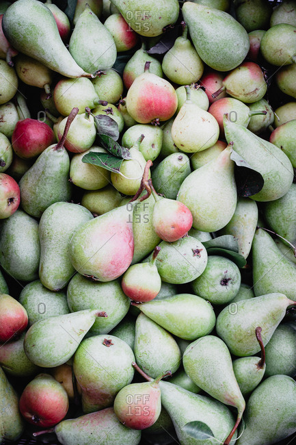 Overhead view of a group of organic pears