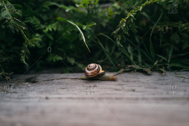 Close-up of snail slithering on wooden board
