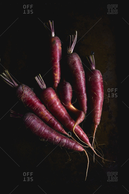 Multi coloured carrots on a dark background, raw.