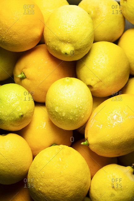 Freshly picked lemons, glistening with water droplets.