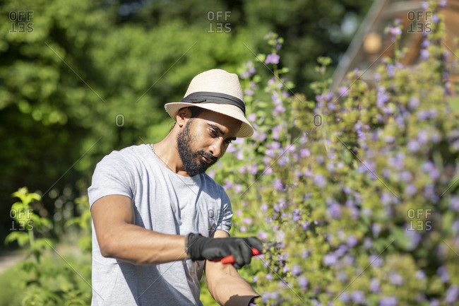 Portrait of bearded young man pruning shrub