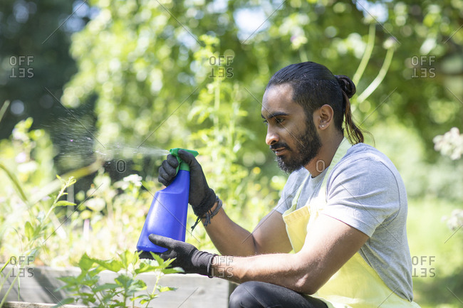 Bearded young man spraying plants in the garden