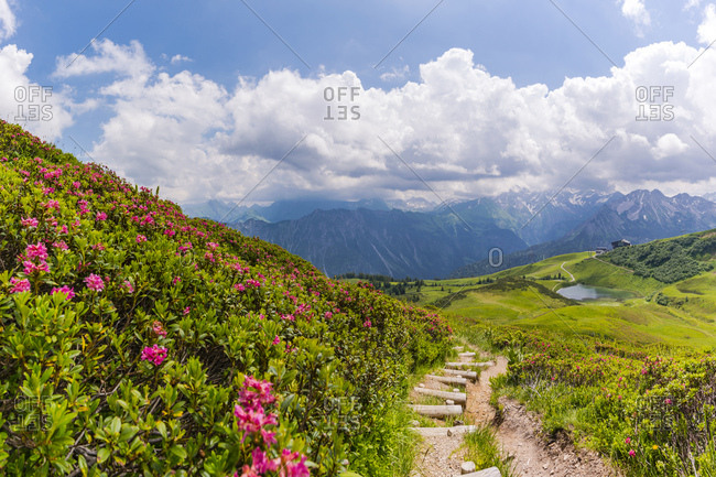 Germany- Bavaria- Allgaeu- Allgeau Alps- Fellhorn- view to Schlappolt Lake with Alpine roses next to hiking trail in the foreground
