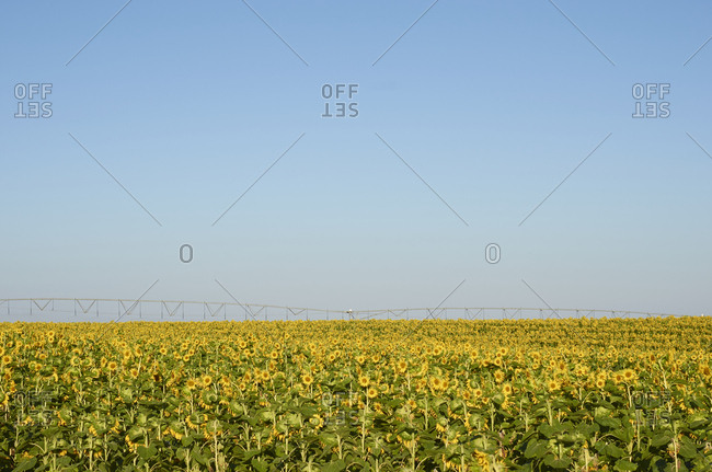 Agricultural irrigation machine on a sunflower field in the Alentejo region, Portugal
