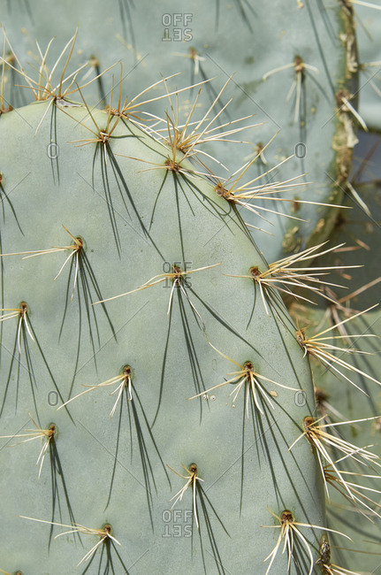 Close up of cactus in Marrakesh, Morocco, Africa