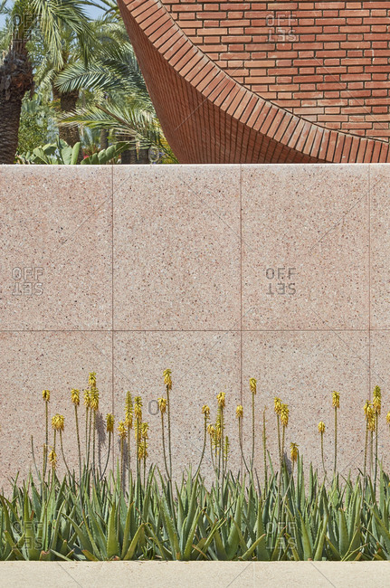 Yellow flowers by brick building in Marrakesh, Morocco, Africa
