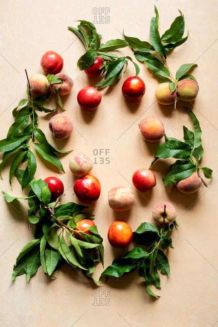 Just picked Farm Fresh Peaches