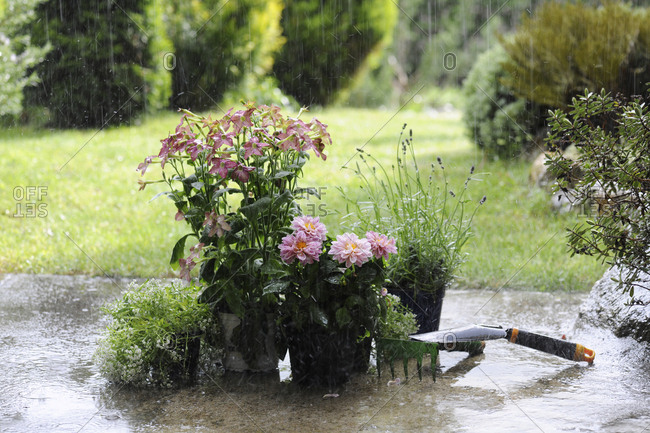 Close-up of potted plants with rake in yard during rainfall