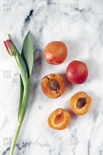 Overhead view of apricots with tulip on marble table