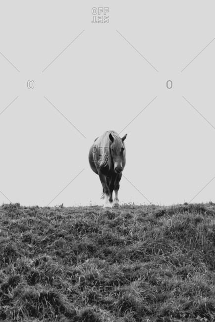 Black and white shot of amazing horse pasturing on meadow in mountains in sunny day