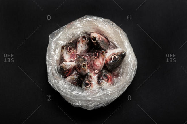 Closeup of raw fish put in open plastic bag heads sticking out