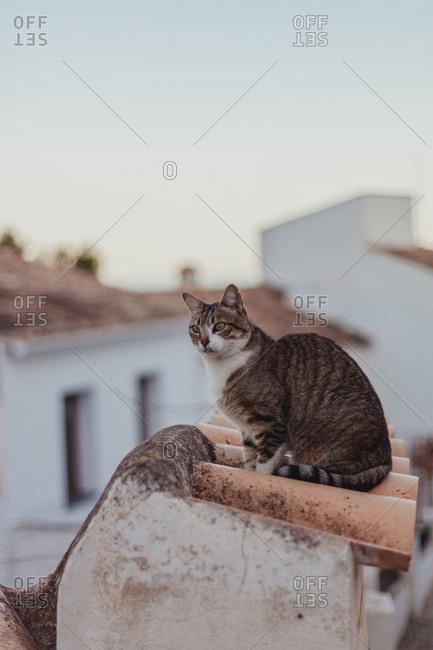 Cat sitting on tile fence near sidewalk among houses on narrow street