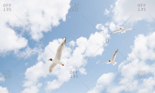Seagull flying on seaside on sunny with clouds day