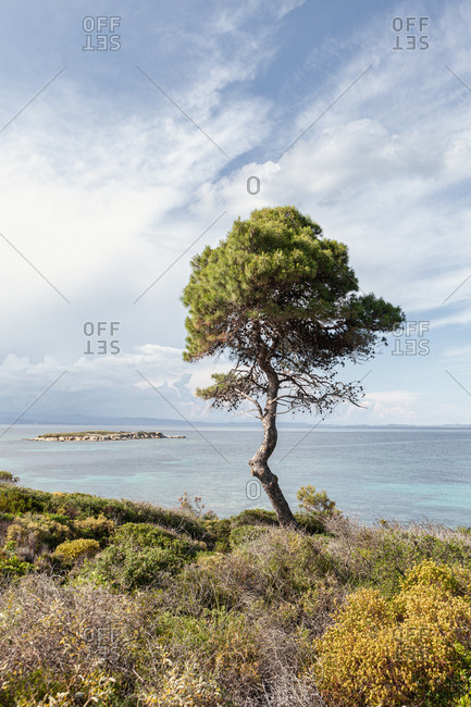 Scenic view of hilly coast and small green tree against calm sea and breathtaking sky in bright day, halkidiki, greece