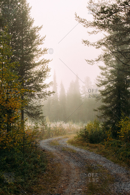 Narrow winding path going through autumn forest on misty day in finland countryside