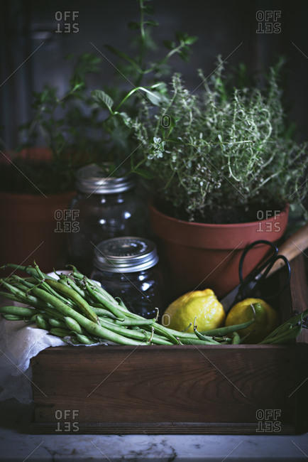Composition of potted plant with raw green beans and lemons with glass jar in wooden box