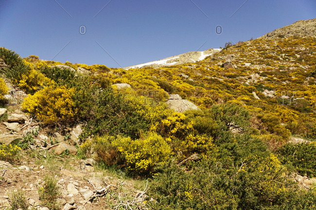 Picturesque view of beautiful flowered landscape on background of blue cloudless sky