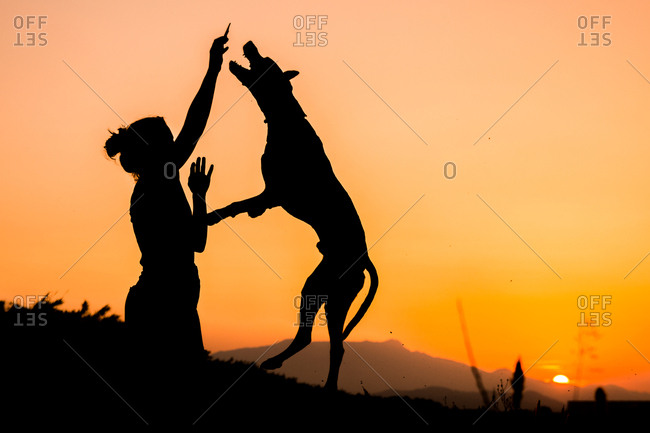 Silhouette of woman training big dog in wild nature on background with orange setting sun. dog jumping up high for treat