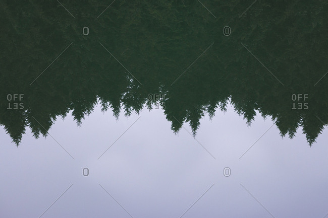 Calm surface of pond water with reflection of conifer forest and cloudless sky in countryside