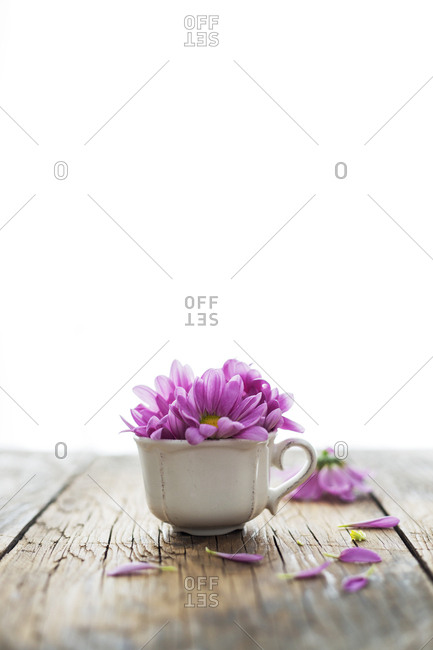 Small porcelain cup with lilac petals of delicate flower placed on lumber tabletop against white background