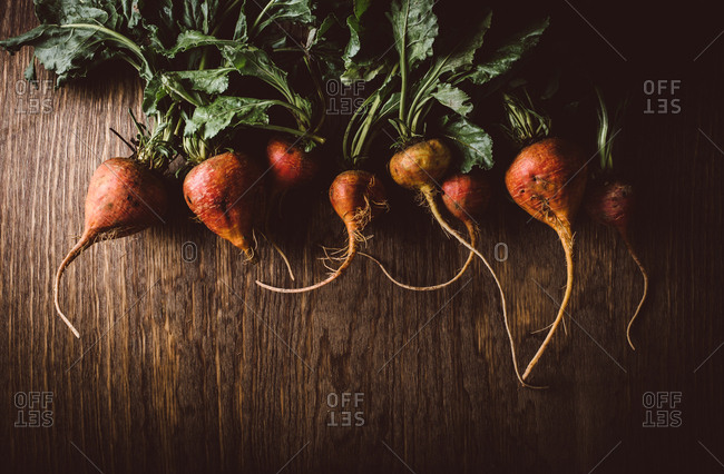 Freshly harvested golden beets on wooden background