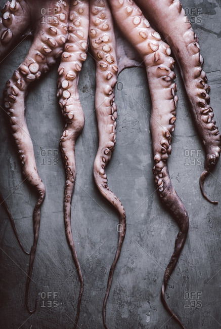 Raw octopus tentacles on gray background