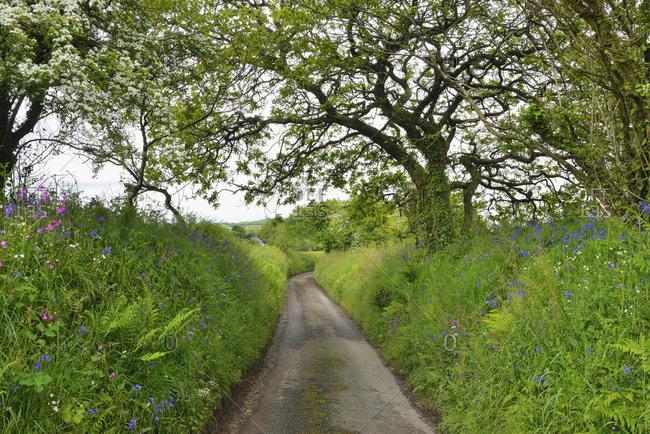 UK- Cornwall- hollow way