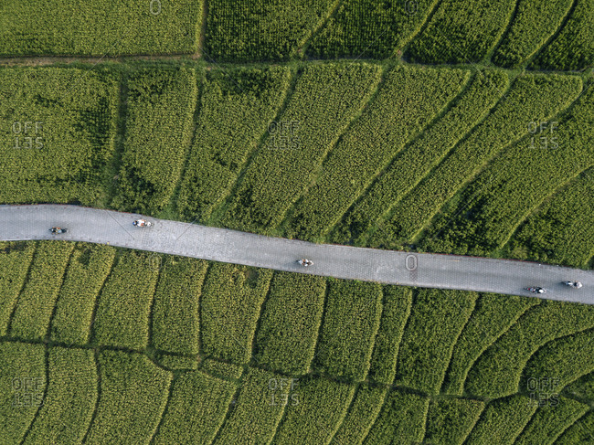 Aerial view of road amidst agricultural landscape at bali