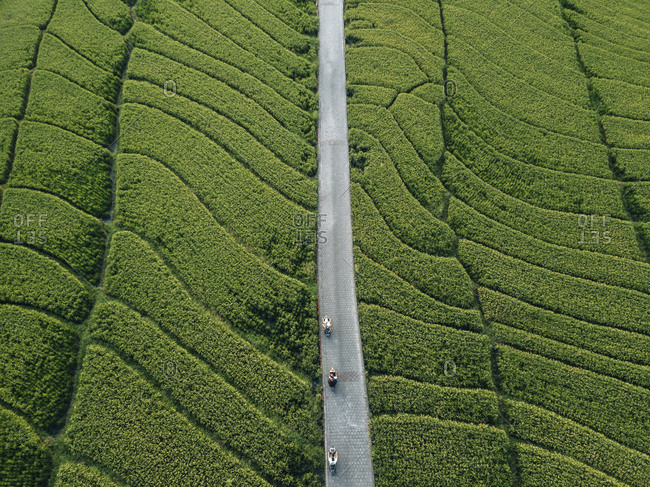 Aerial view of road amidst agricultural green landscape
