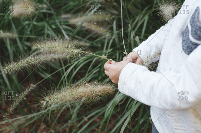 The hands of a small child holding a long blade of grass
