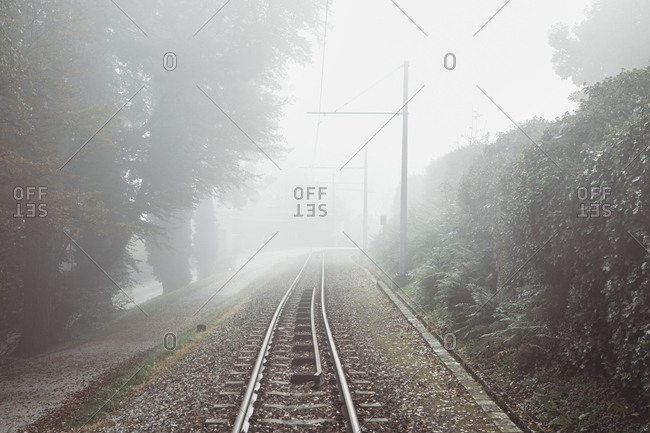 Diminishing perspective of railroad track by plants during foggy weather