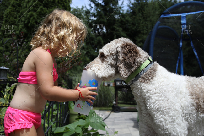Young girl feeding dog water from cup in summer in suburbia