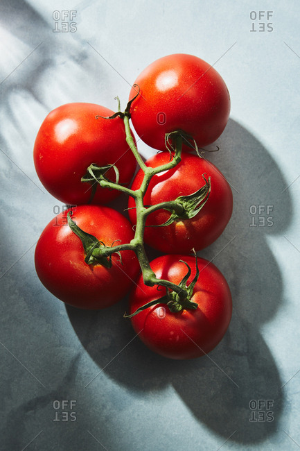 Bunch of red tomatoes on a vine with shadows