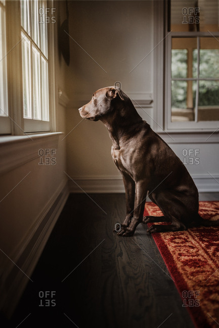 Dog sitting by a window looking outside