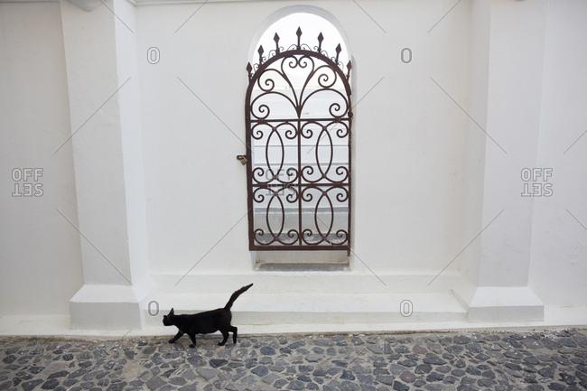 Black cat near church gate, Fira Village, Santorini Island, Cyclades, Greece