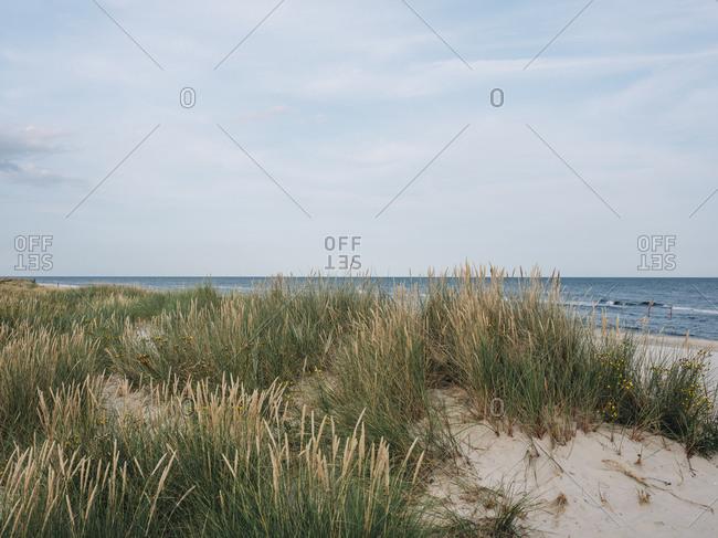 Tall grass on beach in Osterlen, Sweden