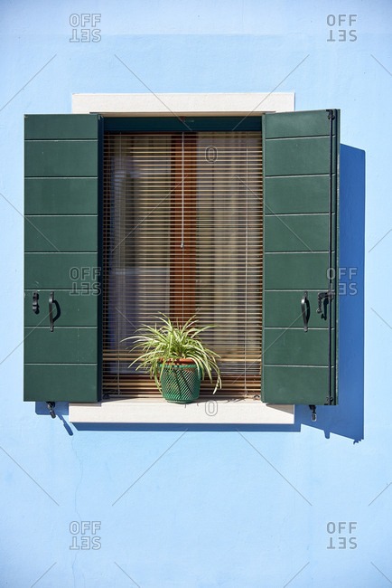 Open window with shutters and a plant. Burano - Venice - Italy