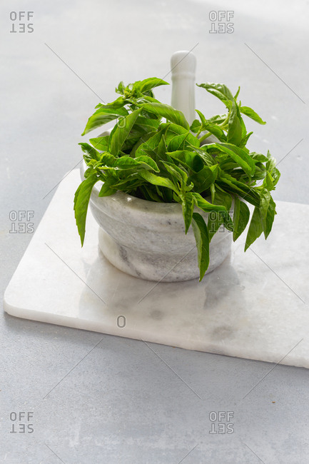 Fresh bunch of basil in a marble mortar