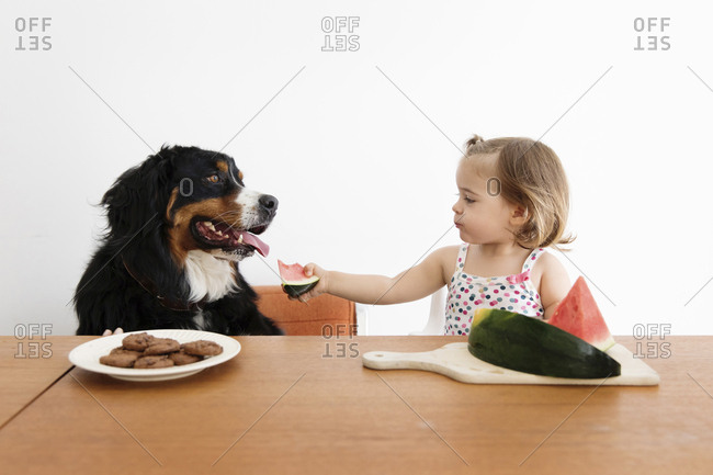Baby girl feeding watermelon to dog while sitting on chair against wall at home