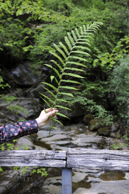 Cropped hand of woman holding ferns in forest