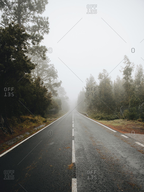 Empty asphalt road through the trees in foggy weather