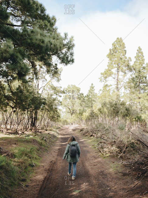 Rear view of young woman walking through the pine trees forest