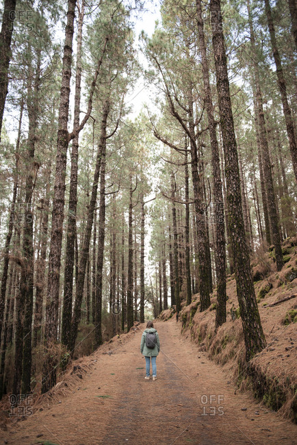 Rear view of young woman standing on the path in pine trees forest