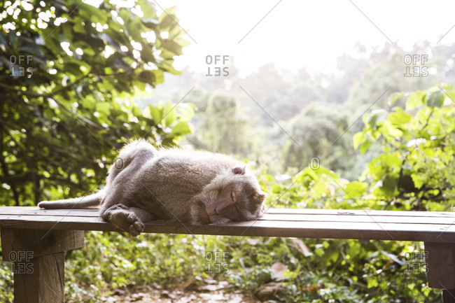Monkey sleeping on bench against trees in forest
