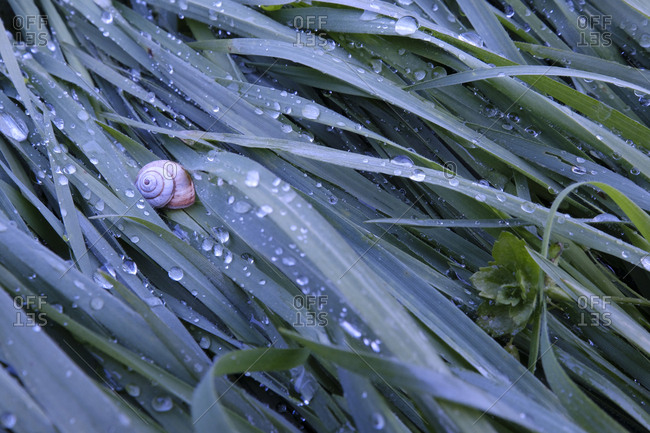 High angle view of snail on wet grass during rainy season